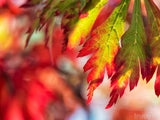 firelight red green fall leaves background blurred