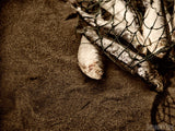 fish in net on beach