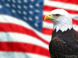 eagle with us flag as background