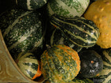 thanksgiving gourds and squash in metal cone