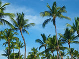 blue sky and a group of palm trees