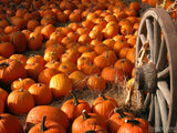 thanksgiving pumpkins harvest field wagon wheel