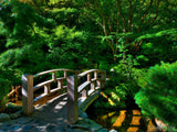 lush green forest Japanese garden bridge
