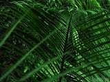 easter palm sunday leafy palm branch