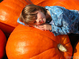 little girl on giant pumpkin