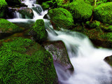 water in creek cascades over mossy rocks