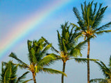 palm trees under the rainbow