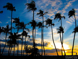 palm trees on a sunset beach