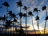 grove of palm trees at sunset