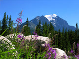 wildflowers and a distant mountain peak