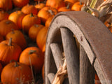 pumpkins by old wagon wheel