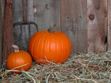 outbuilding with pumkins