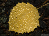 raindrops on yellow fall leave background