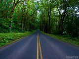 road through the green trees