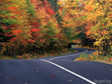 red green and orange trees on road to autumn