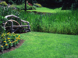 rustic bench in background of green grass and spring flowers