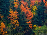 fall seasons of change color trees in forest background