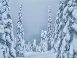 silver winter trees fog background