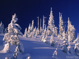 snow covered trees at the top of a ridge