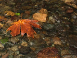 background stream of water with fall maple leaf