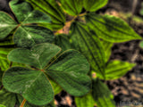tropical abstract of a clover