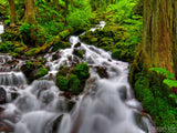 water tumbling down a forest creek background