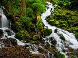 two forest streams meet in lush forest