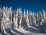 snow shadow trees winter forest background