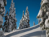 background of winter snow slope and trees