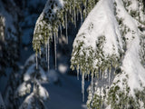 icicles winters tinsel on tree in background