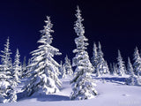 snow covers trees in a winter wonderland