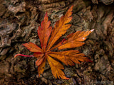 single fall orange leave on tree trunk background