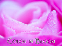 Color in Bloom Backgrounds Collection