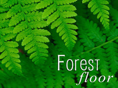 forest floor backgrounds collection