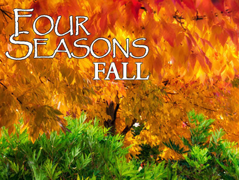 four seasons fall backgrounds collection