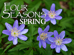 four seasons spring backgrounds collection