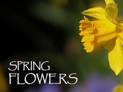 Spring Flower Backgrounds