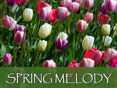 spring melody backgrounds collection
