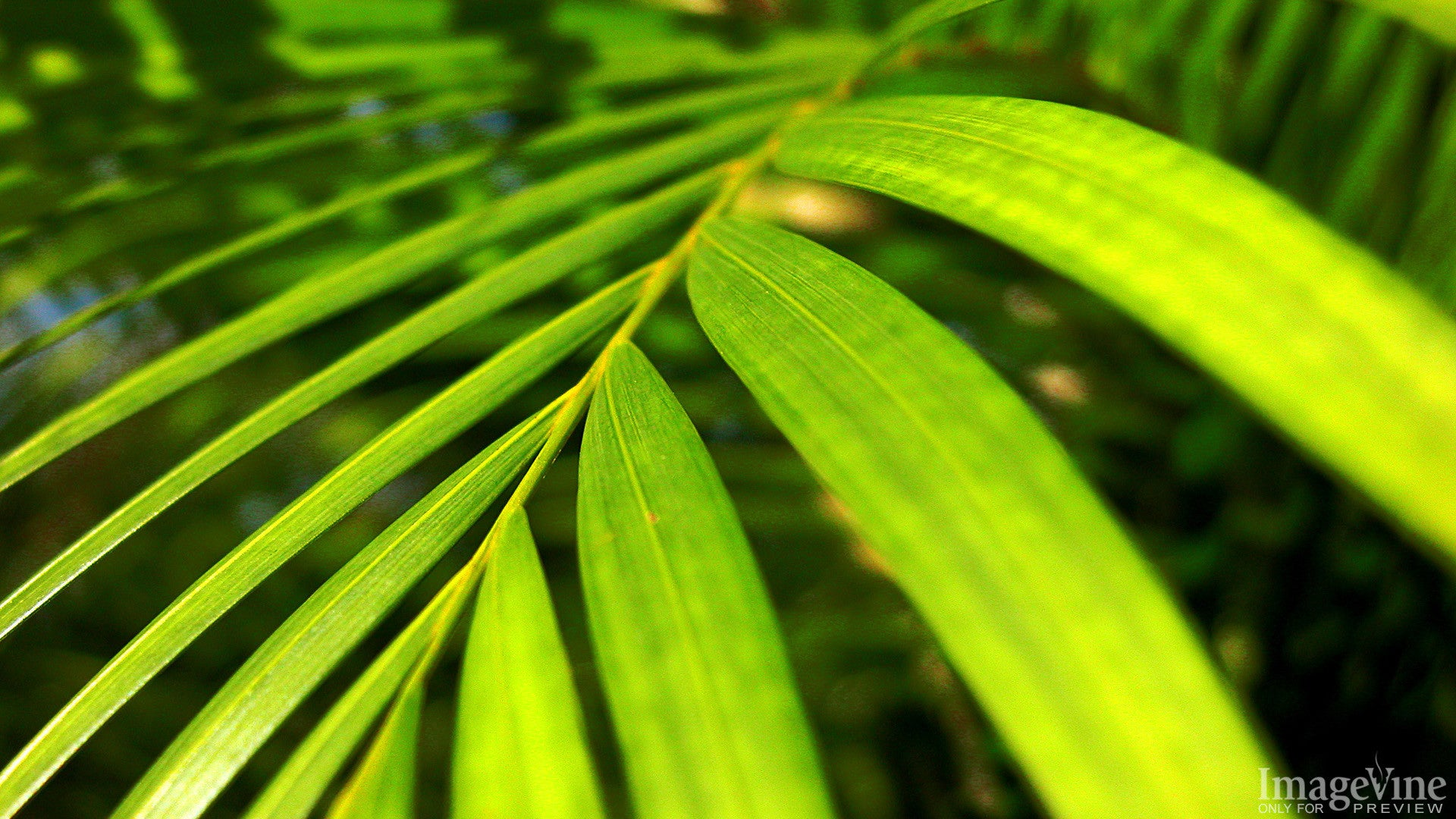 palm sunday, palm branch, close-up, green, waving, easter background
