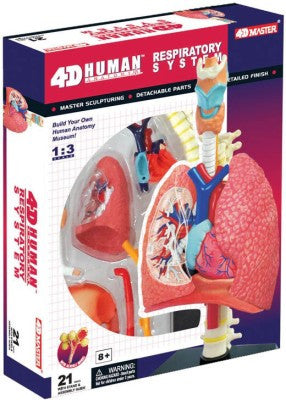 4D Respiratory System Model