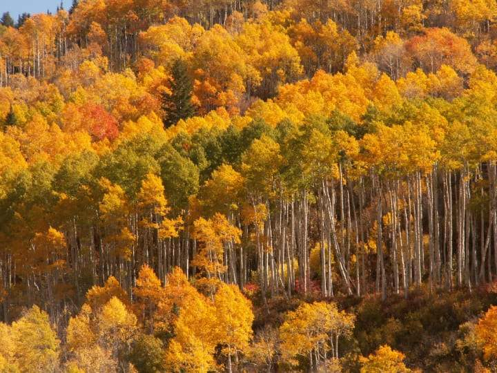 All Aglow: 5 Great Fall Foliage Hikes in the Wasatch - Ogden Made