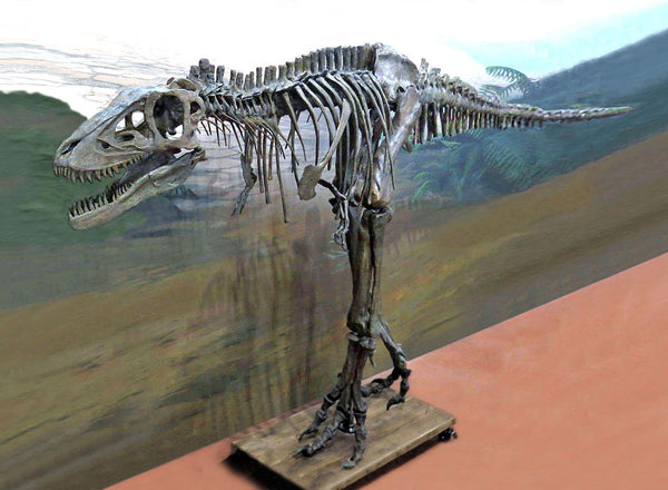 T rex Skeleton LIFE SIZE BABY - Triassica Dinosaur Fossils