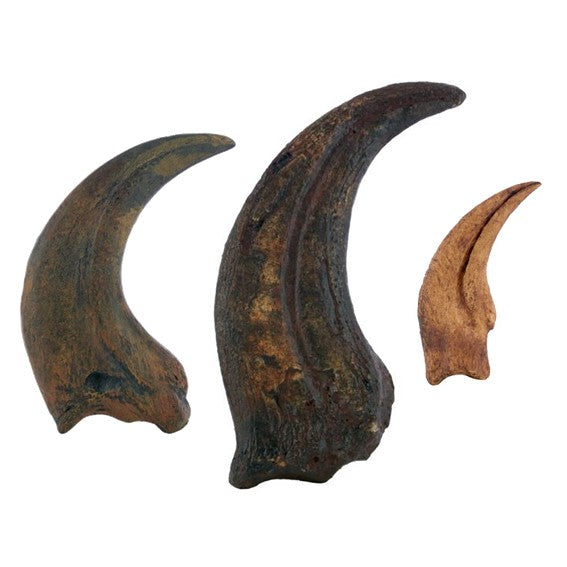 Terrifying Raptor Claws Replica Fossils - Triassica Dinosaur Fossils