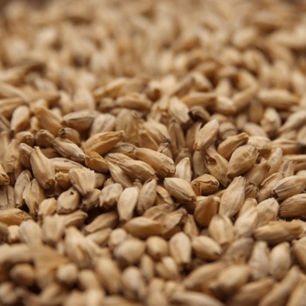 GRAINS - 6 Row Malt - 55lb