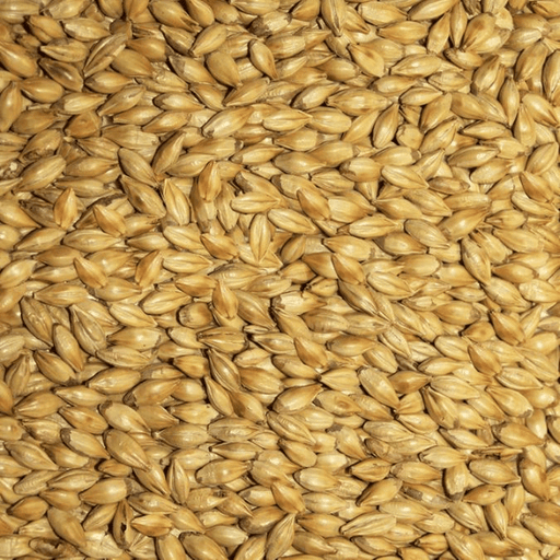GRAINS - Amber Malt - 5lb