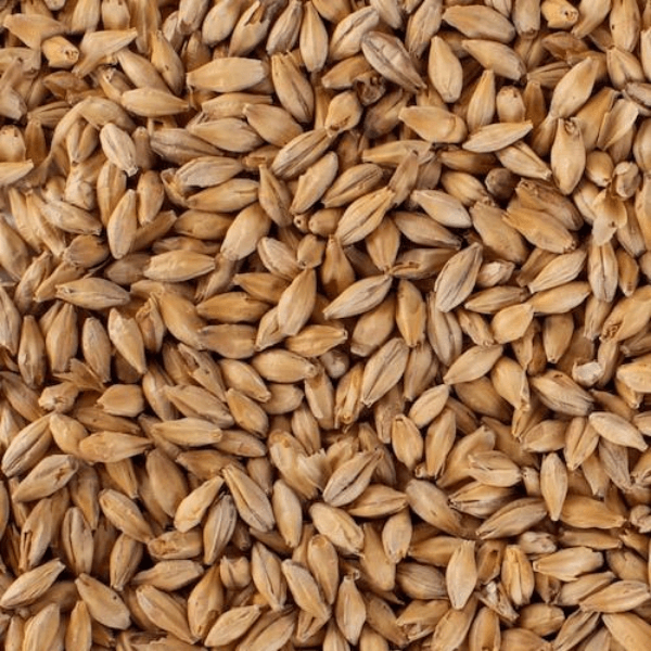 GRAINS - Light Munich Malt - 5lb