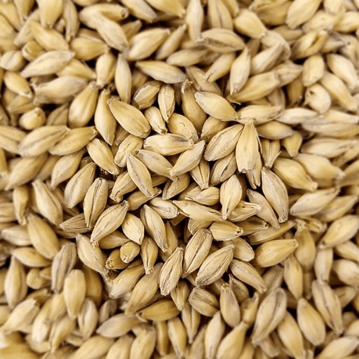 GRAINS - Pilsner Malt - 55lb