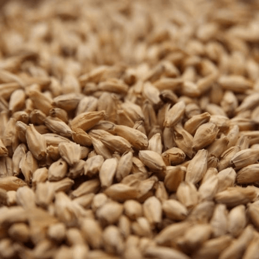 GRAINS - 6 Row Malt - 1lb