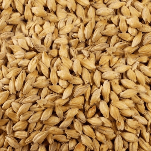 GRAINS - Maris Otter (UK Pale Ale) 1lb - Muntons
