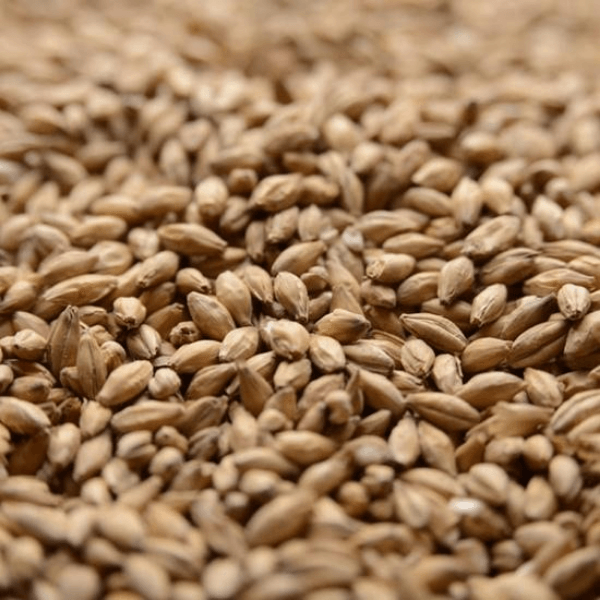 GRAINS - Peated Malt - 1lb